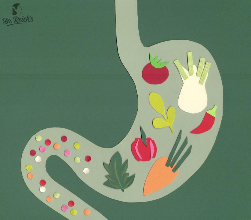 Fragen zu Reizdarm: Dr. Reichs Idealisiertes Schema eines Magens bei beschwerdefreier Nahrungsaufnahme