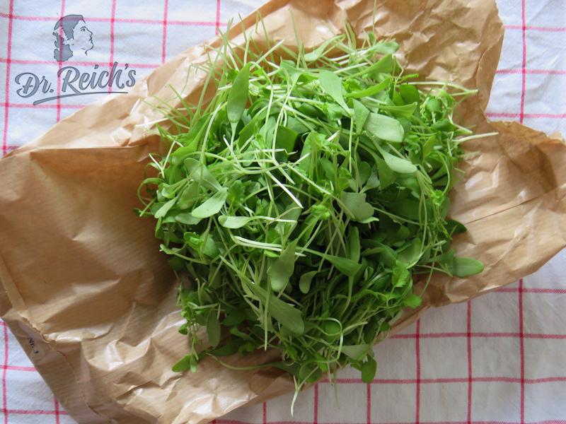 Direkt vom Feld: Dr. Reich´s Salat Zutat frische Kresse